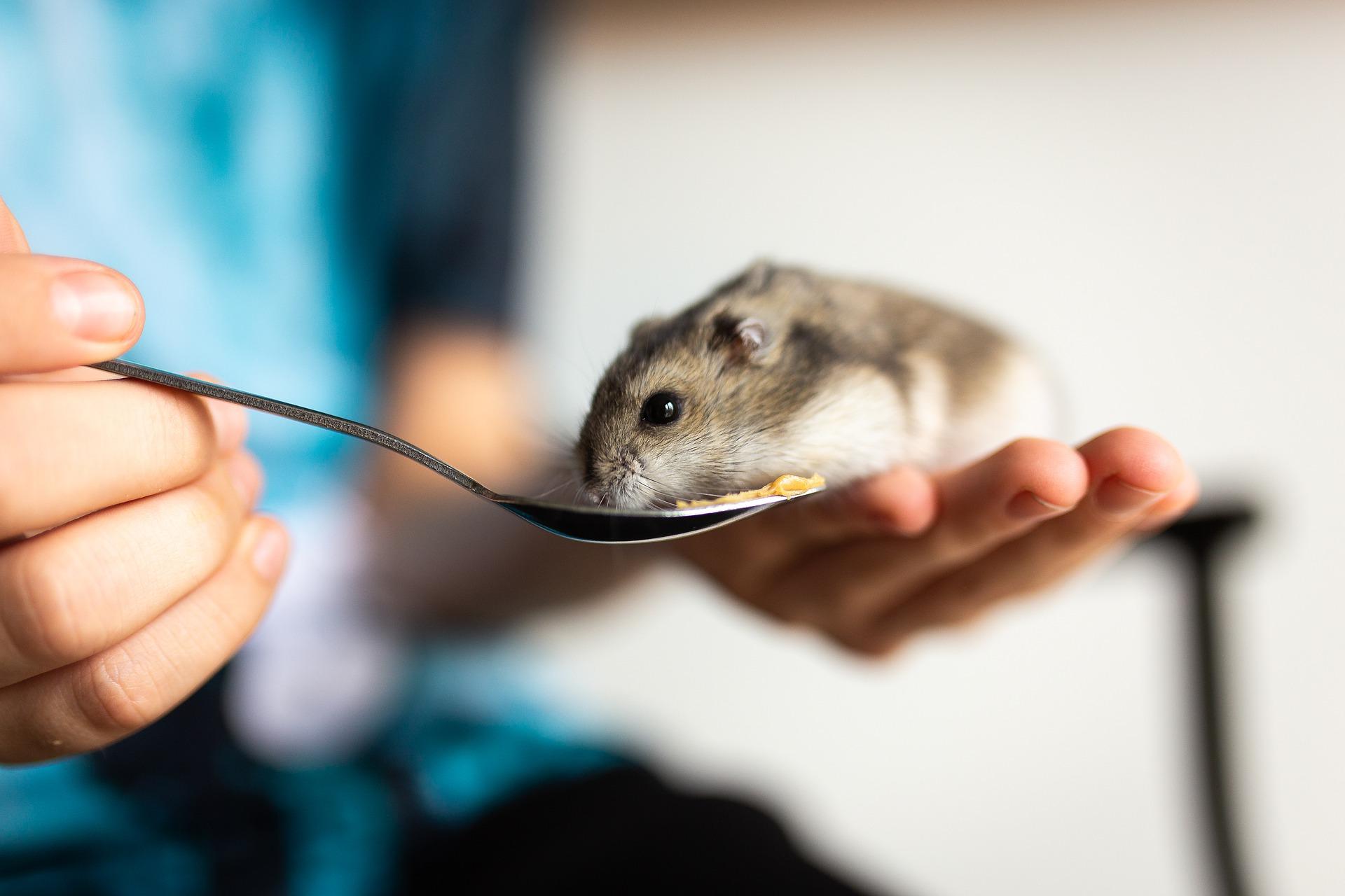 Hamsterfutter Bio - Kaufideen.