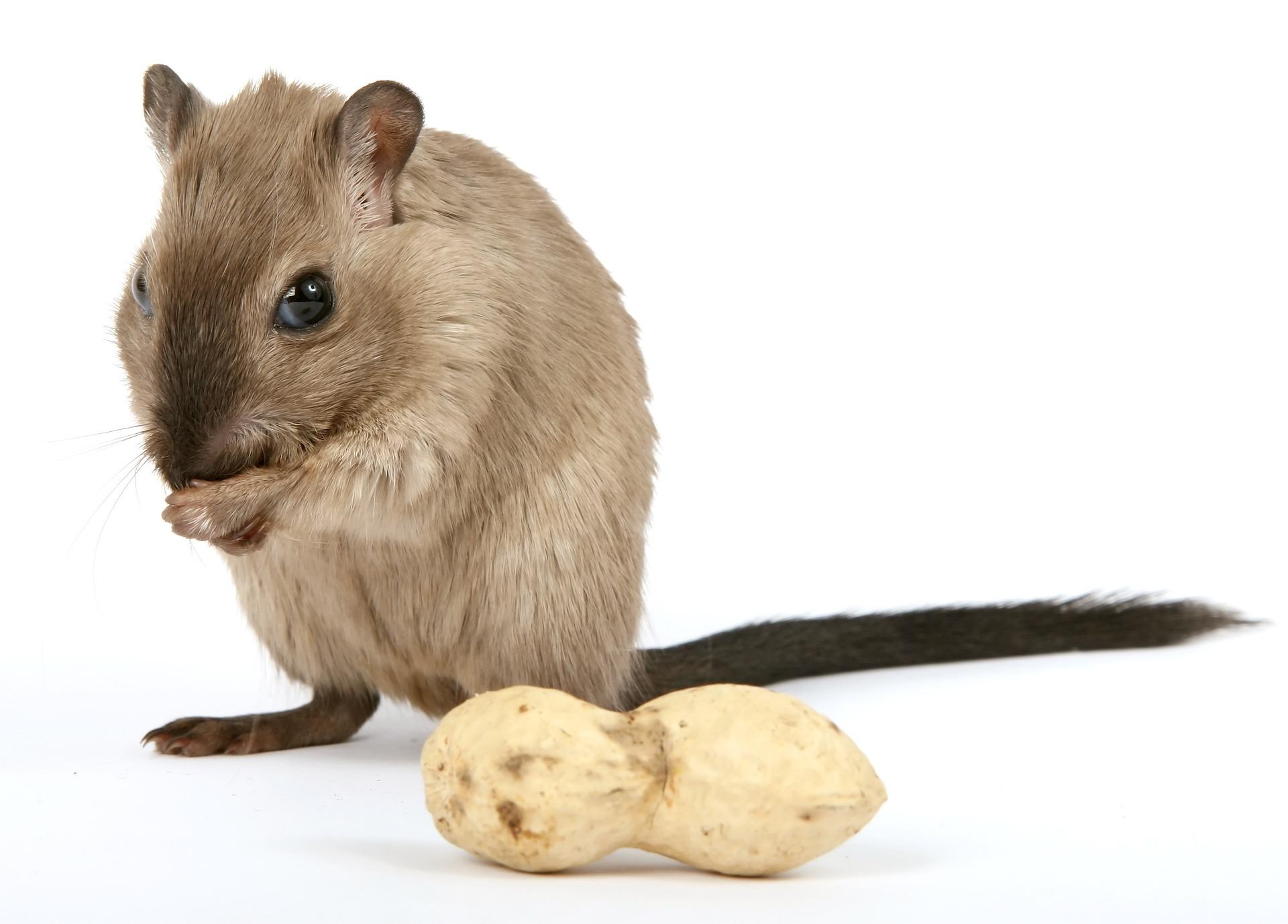 Hamsterfutter bio - Hier entlang!