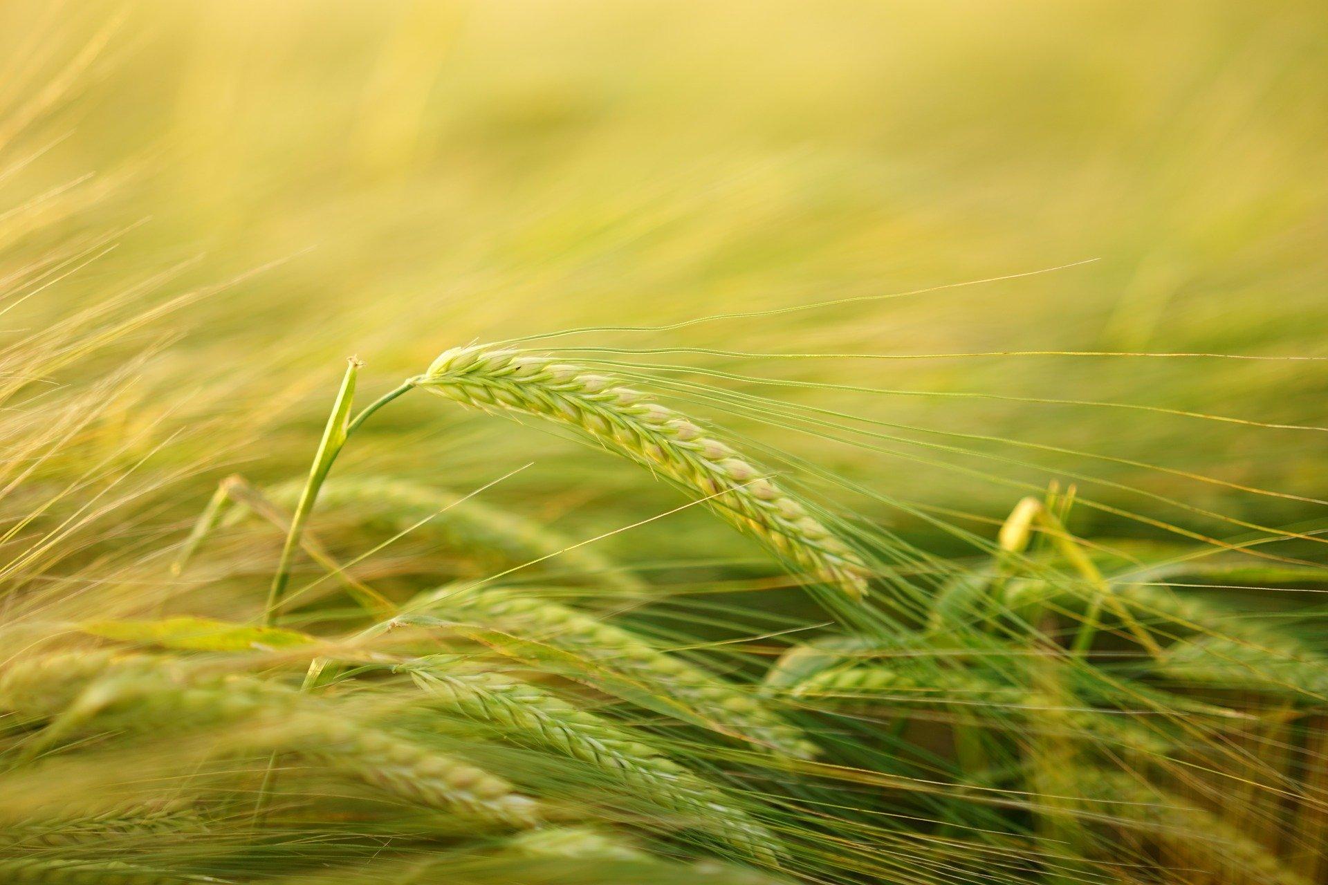 Bio Gerstengrassaft Pulver - Kaufideen. Beste Bio Gerstengrassaft Pulver finden
