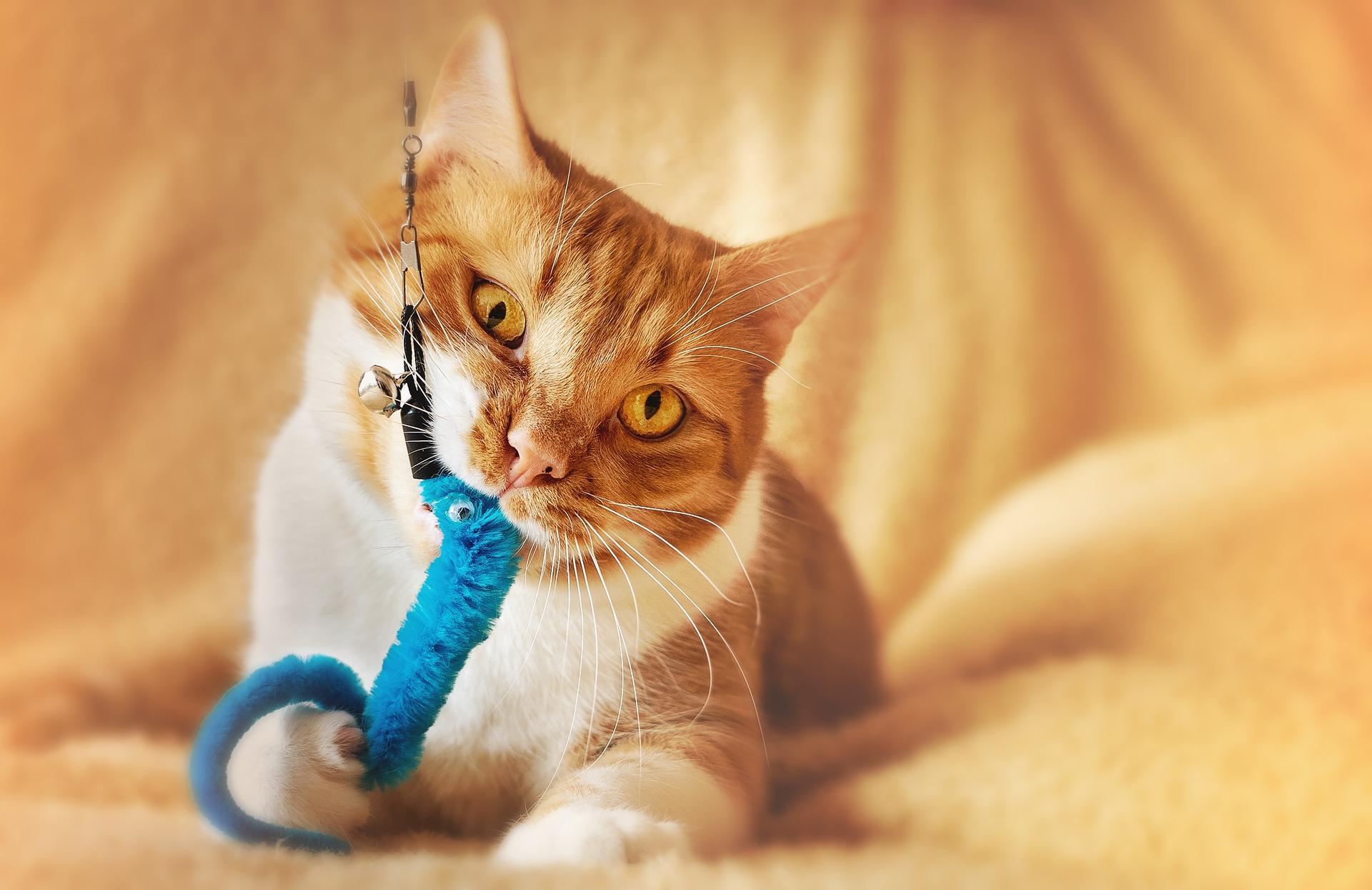 Katzenspielzeug Bio - Tolle Kaufideen.