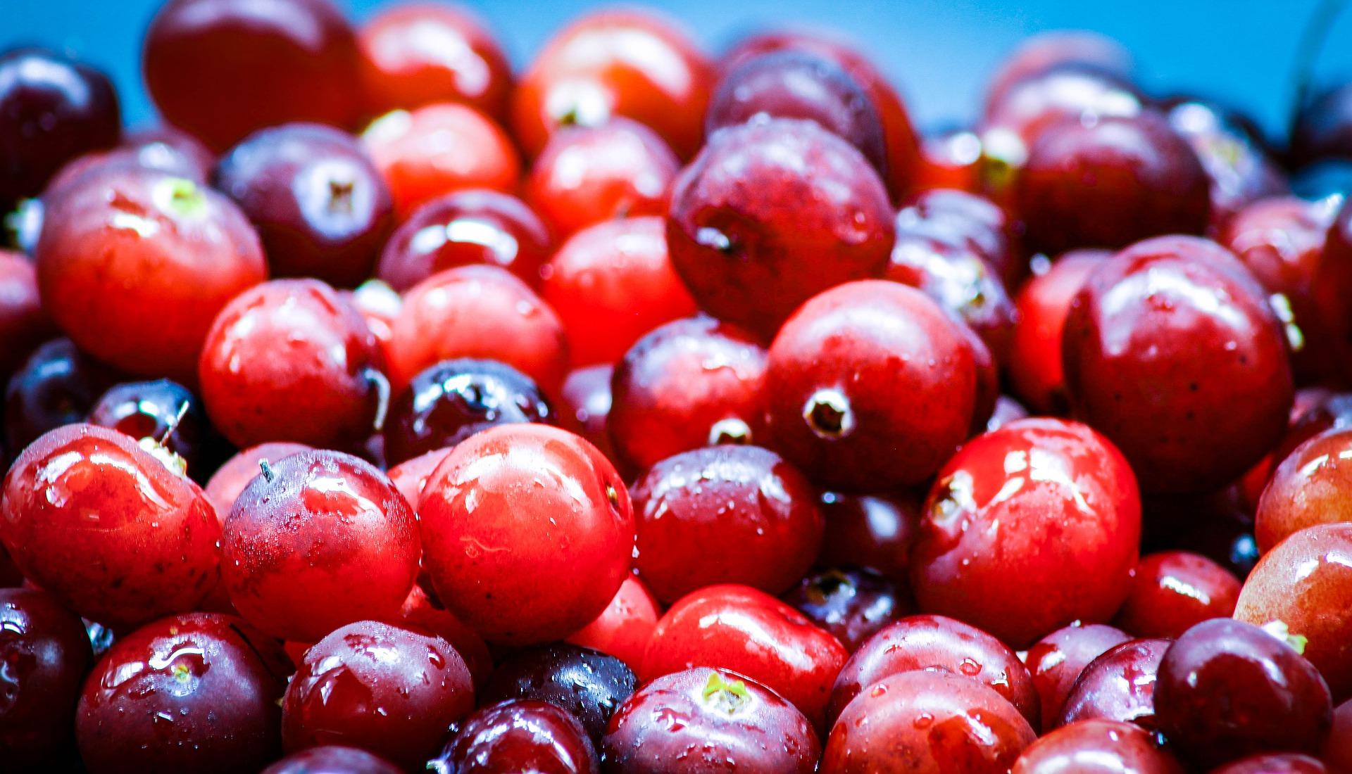 Cranberry Pulver Bio - Kaufideen. Beste Cranberry Pulver Bio finden