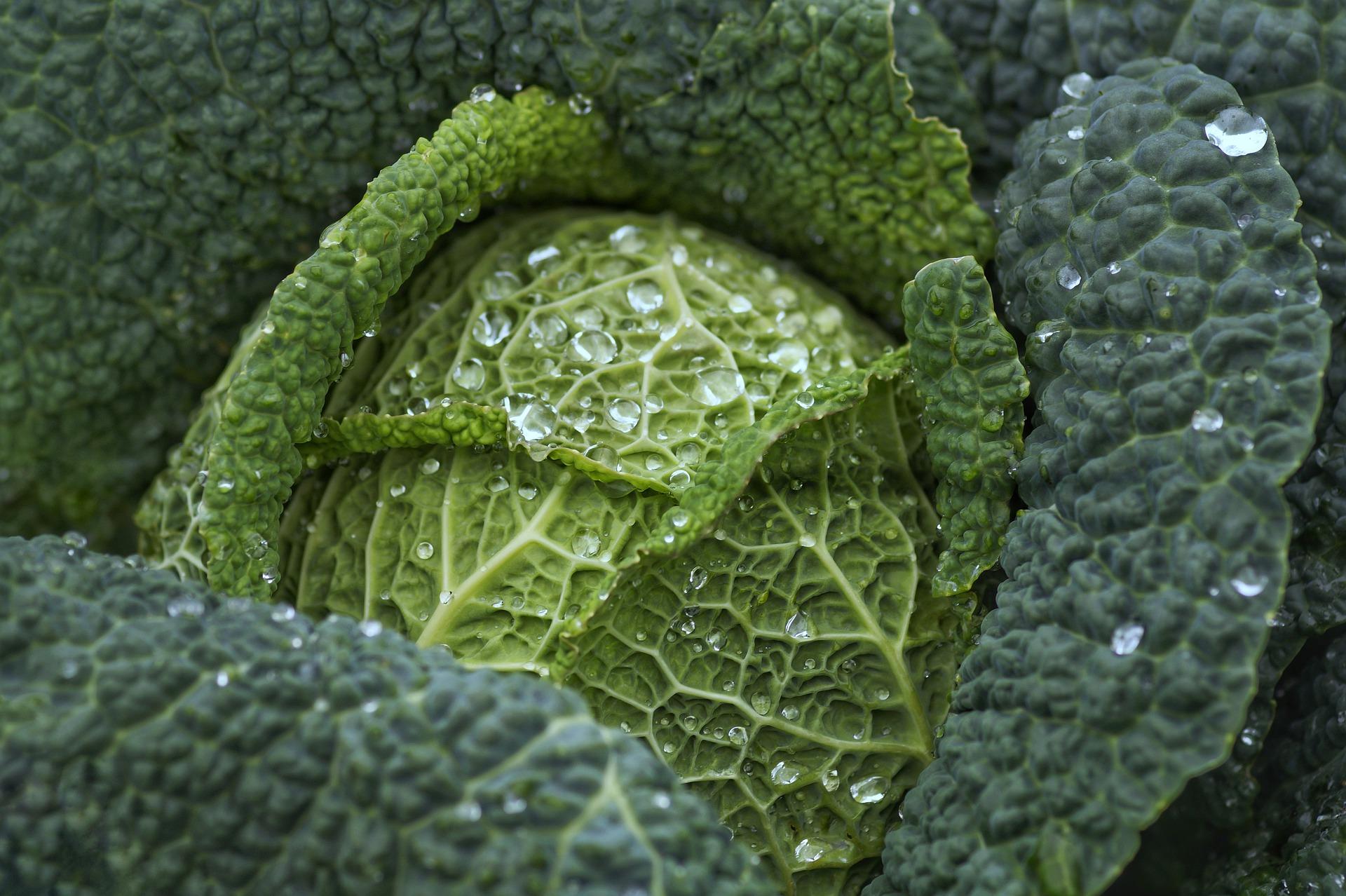 Grünkohl Pulver Bio - Kaufideen. Beste Grünkohl Pulver Bio finden